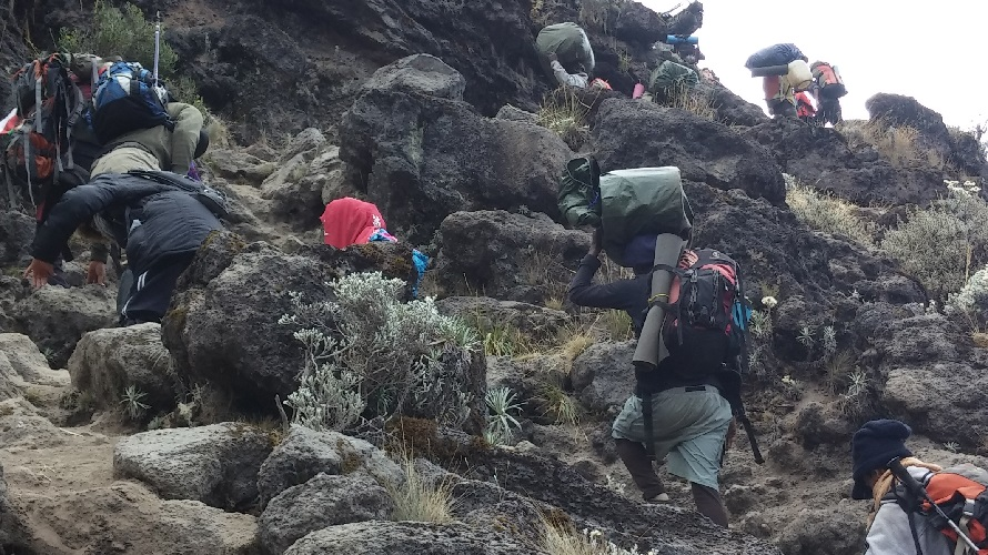 Porters carry large bundles up a mountain.