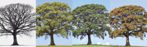 An image of trees throughout the four season.