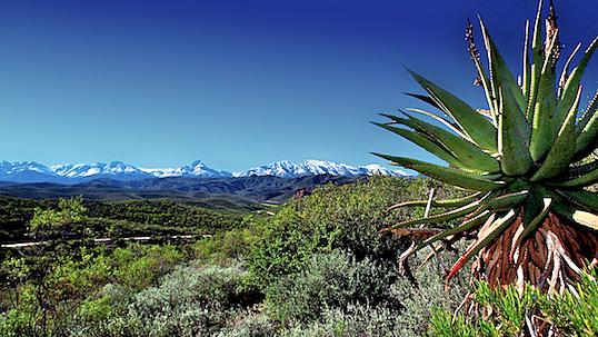 Snow capped mountains with cacti and various foliage.