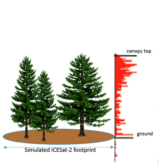 ICE-Sat tree height