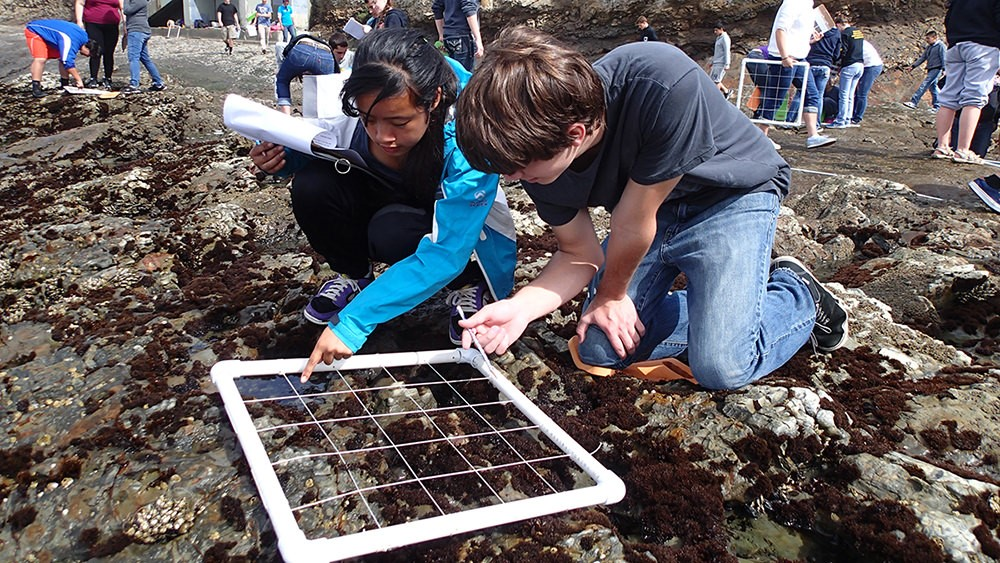 The LiMPETS network provides authentic, hands-on coastal monitoring experiences that empower teachers, students, and the community to conduct real science and serve as ocean stewards. Photo: Jessie Altstatt/NOAA