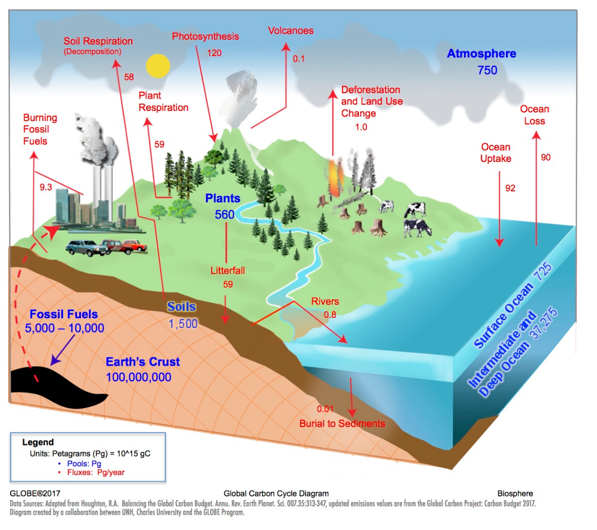 Global Carbon Cycle Diagram