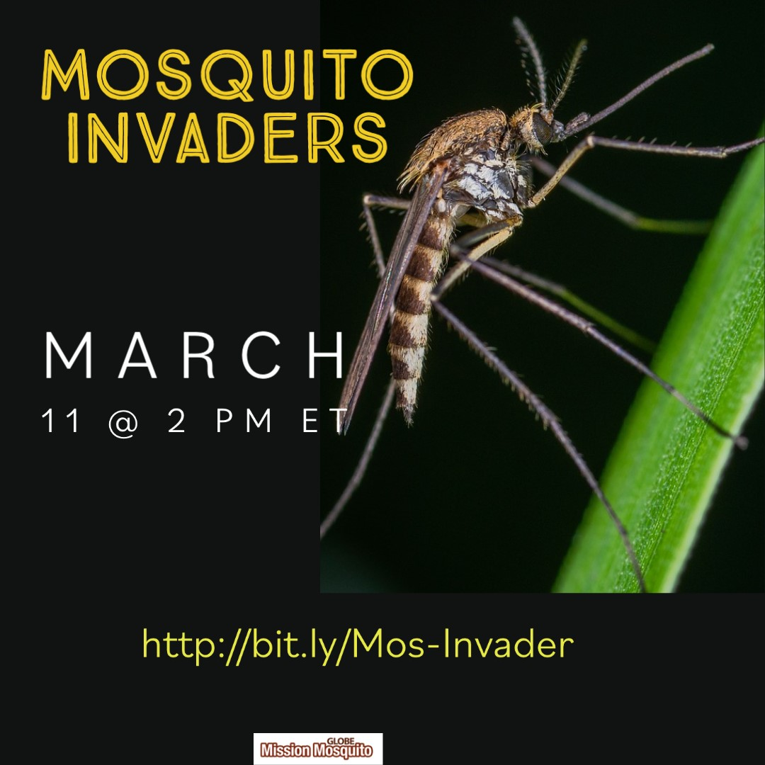 GLOBE Mission Mosquito 11 March webinar shareable