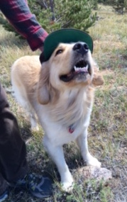 Buddy staying cool under a hat