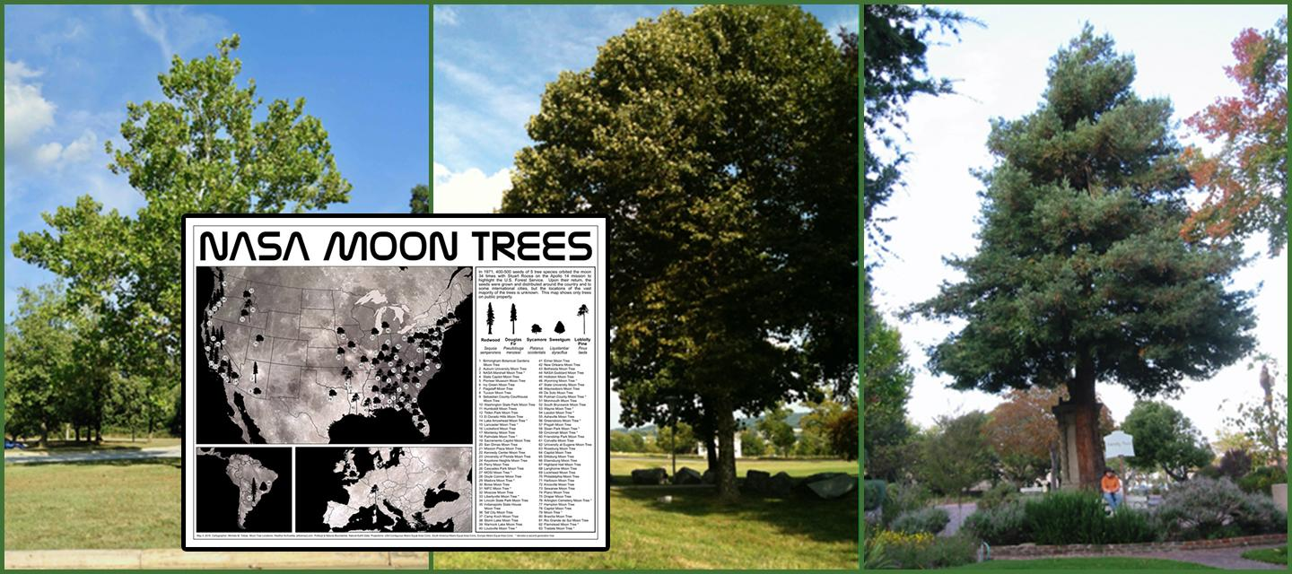 Learn about Moon Trees in the latest science blog post