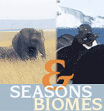 Seasons and Biomes image