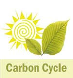 Carbon Cycle image