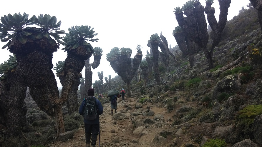 Several people hike through rocky terrain with tall vegetation.
