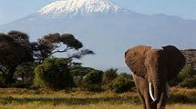 An elephant in front of a snowy mountain.