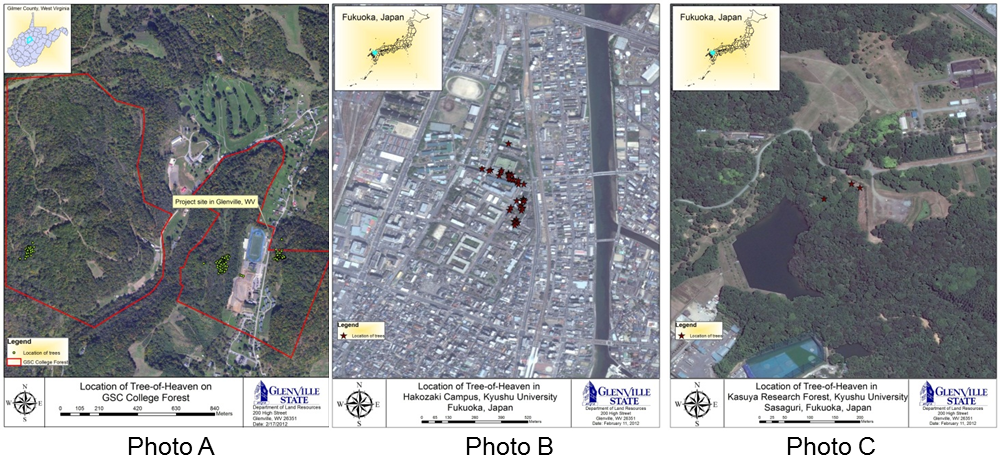 Maps showing the location of tree-of-heaven in Glenville, West Virginia and Fukuoka, Japan.
