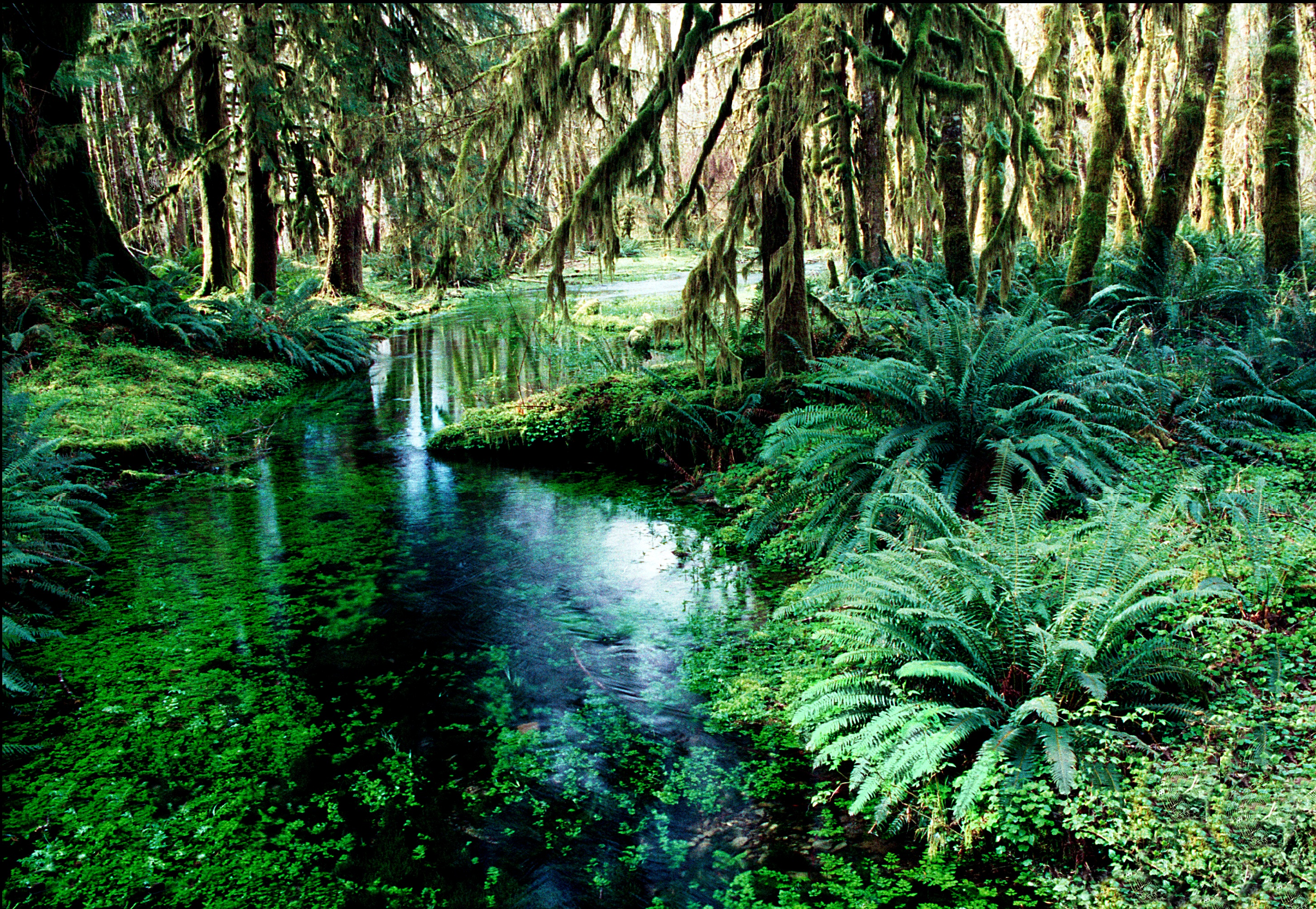 Photo of rainforest with a stream running through it - Photo copyright property of UCAR, Photo by Gary Anthes